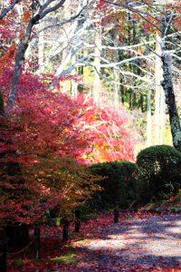 紅葉の写真 Autumn leaves Photography 3597