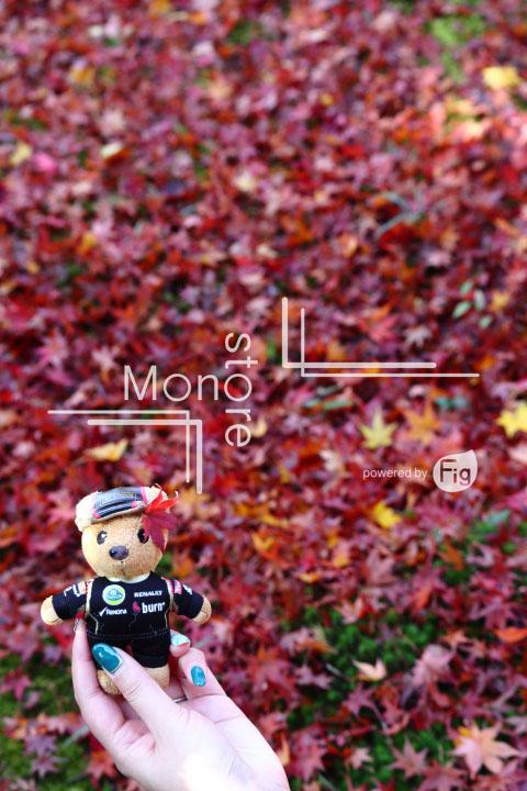 紅葉の写真 Autumn leaves Photography 3601