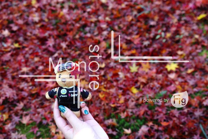 紅葉の写真 Autumn leaves Photography 3602