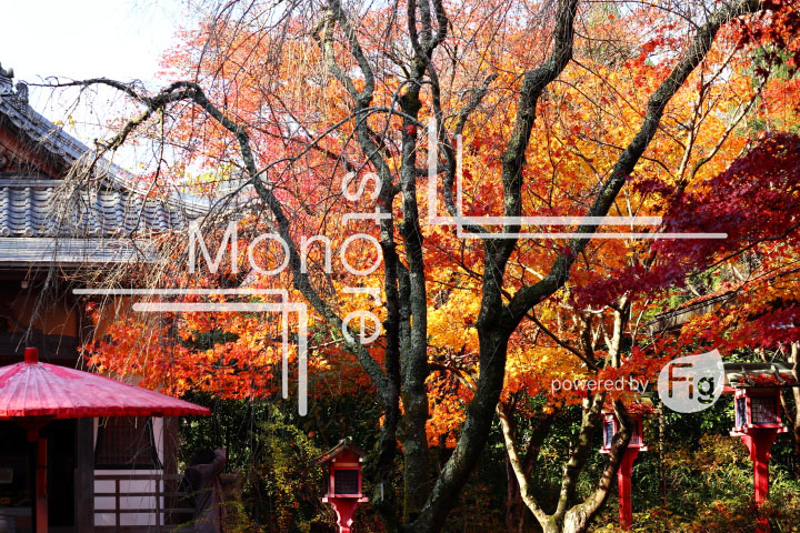 紅葉の写真 Autumn leaves Photography 3622