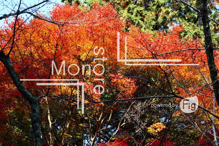 紅葉の写真 Autumn leaves Photography 3625