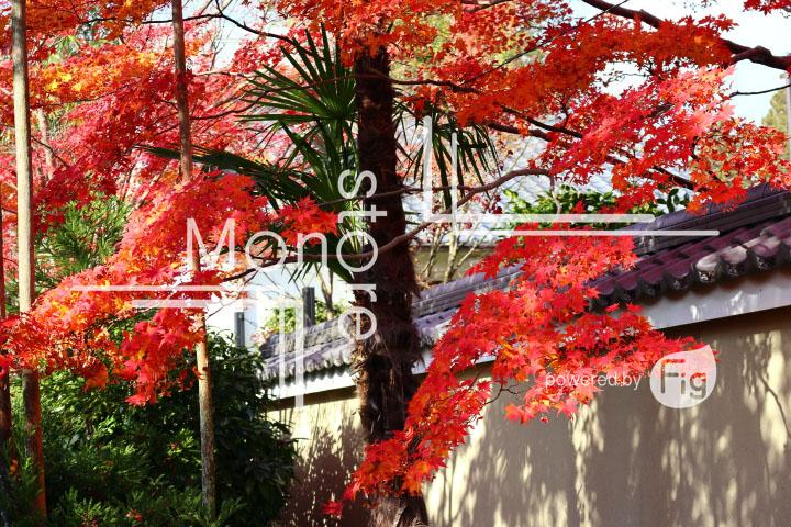 紅葉の写真 Autumn leaves Photography 3629