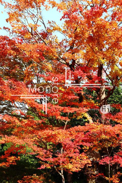 紅葉の写真 Autumn leaves Photography 3634