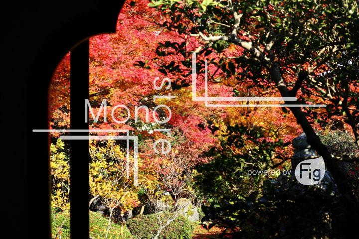 紅葉の写真 Autumn leaves Photography 3637