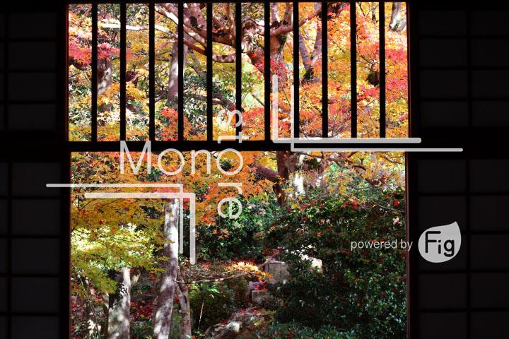 紅葉の写真 Autumn leaves Photography 3639