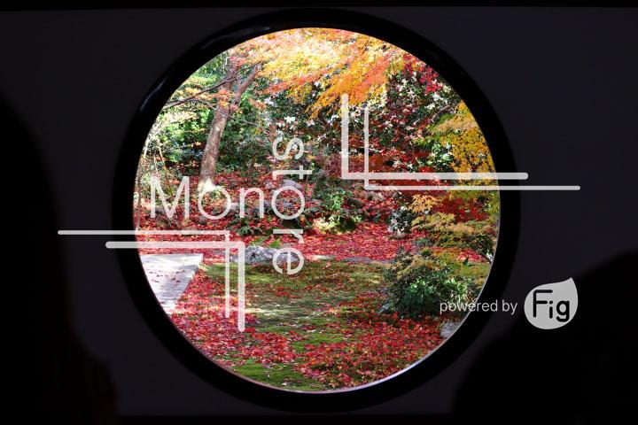 紅葉の写真 Autumn leaves Photography 3640