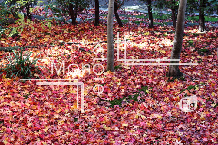 紅葉の写真 Autumn leaves Photography 3643
