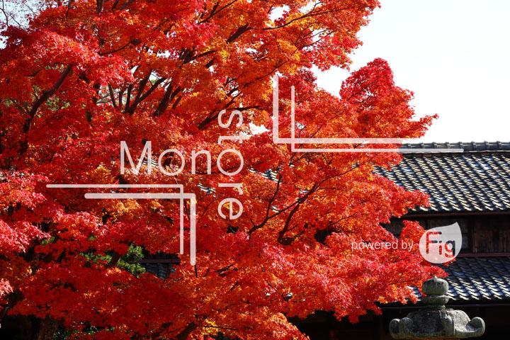 紅葉の写真 Autumn leaves Photography 3645