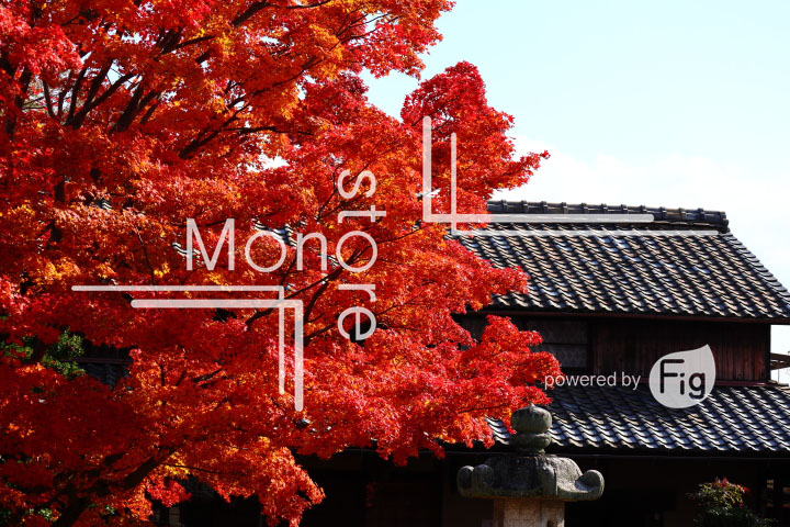 紅葉の写真 Autumn leaves Photography 3646