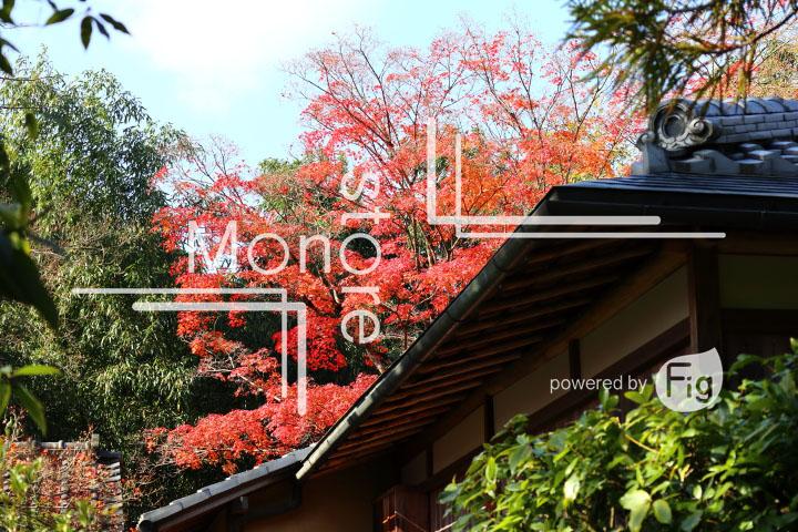 紅葉の写真 Autumn leaves Photography 3657