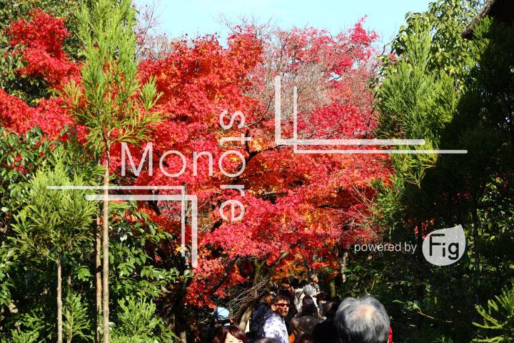 紅葉の写真 Autumn leaves Photography 3665