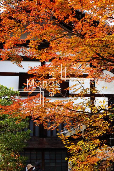 紅葉の写真 Autumn leaves Photography 3667
