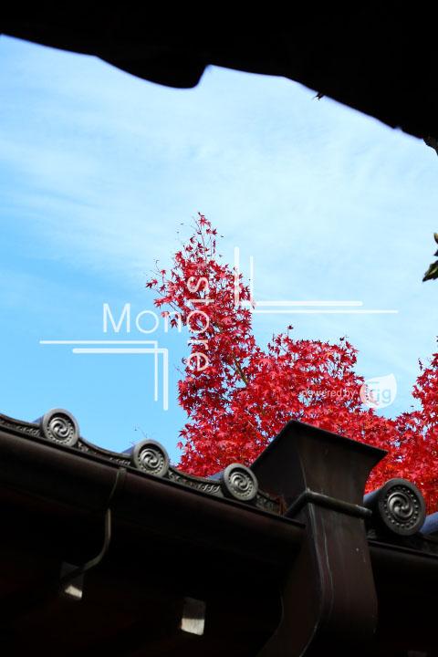 紅葉の写真 Autumn leaves Photography 3669