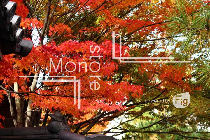 紅葉の写真 Autumn leaves Photography 3672