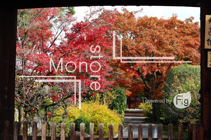 紅葉の写真 Autumn leaves Photography 3673