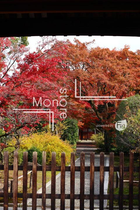 紅葉の写真 Autumn leaves Photography 3674
