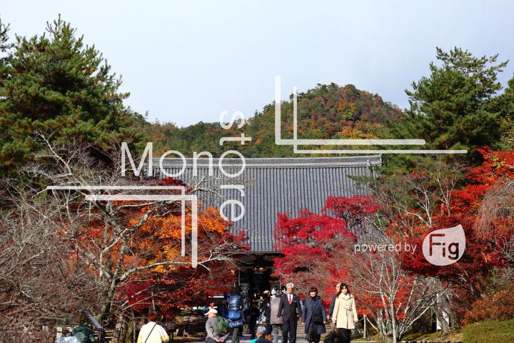 紅葉の写真 Autumn leaves Photography 3677