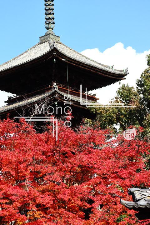 紅葉の写真 Autumn leaves Photography 3679