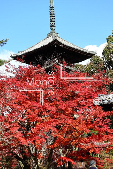 紅葉の写真 Autumn leaves Photography 3681