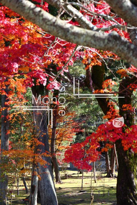 紅葉の写真 Autumn leaves Photography 3692
