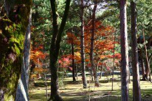 紅葉の写真 Autumn leaves Photography 3694