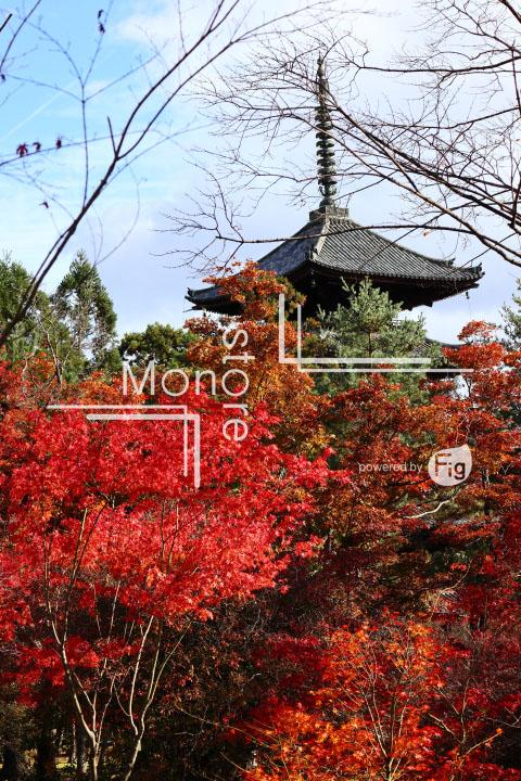 紅葉の写真 Autumn leaves Photography 3704