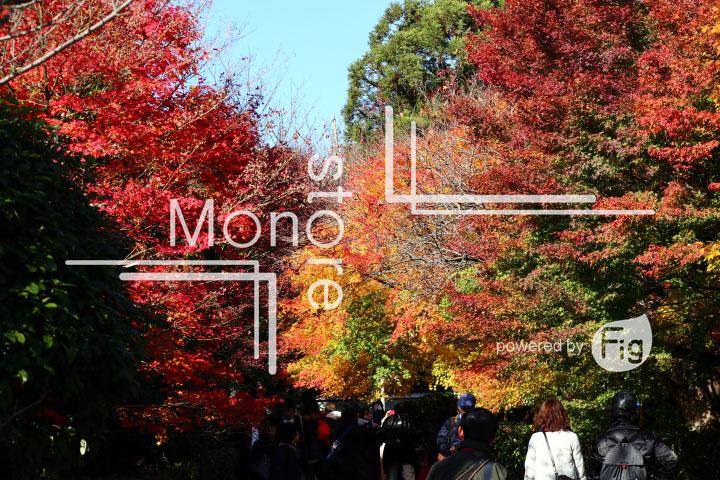 紅葉の写真 Autumn leaves Photography 3709