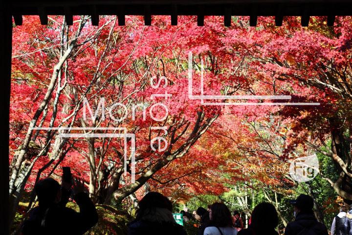 紅葉の写真 Autumn leaves Photography 3714