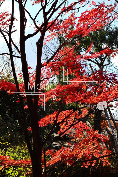紅葉の写真 Autumn leaves Photography 3718