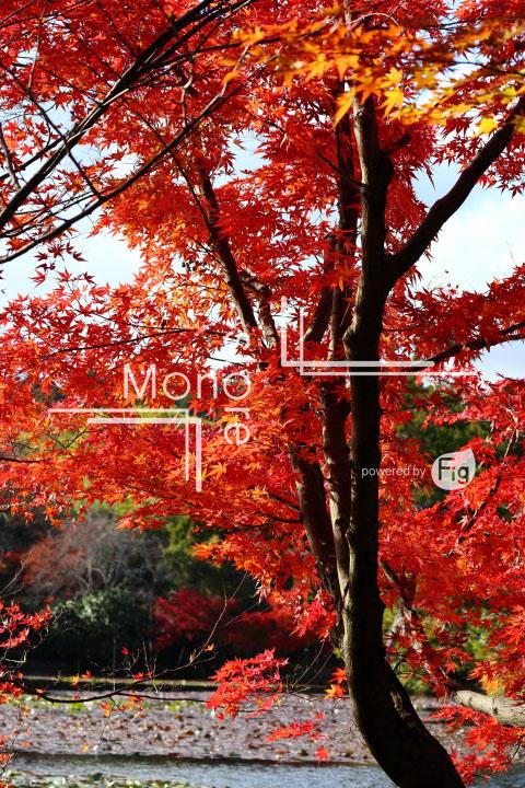 紅葉の写真 Autumn leaves Photography 3721
