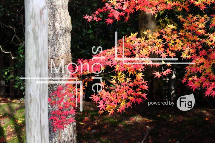 紅葉の写真 Autumn leaves Photography 3730