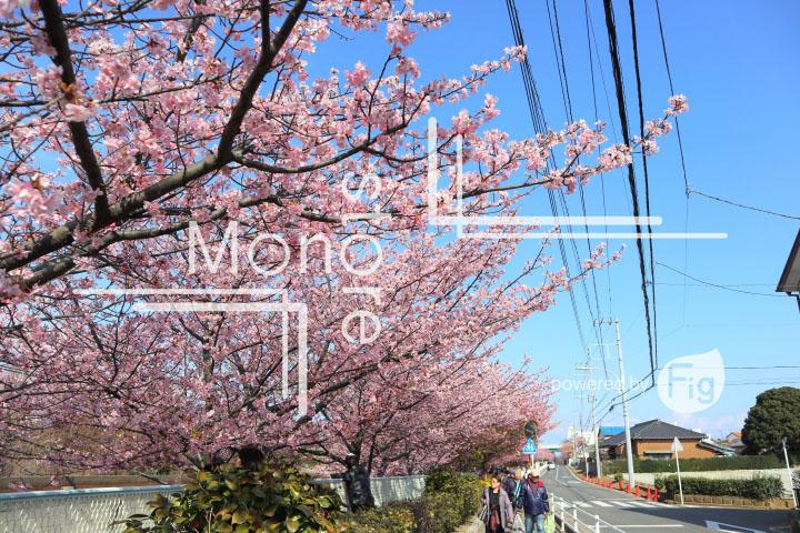 桜の写真 Cherry blossoms Photography 4546
