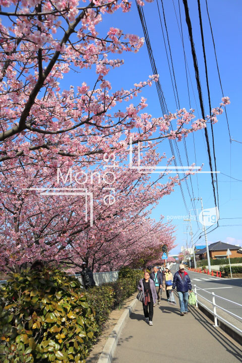 桜の写真 Cherry blossoms Photography 4547
