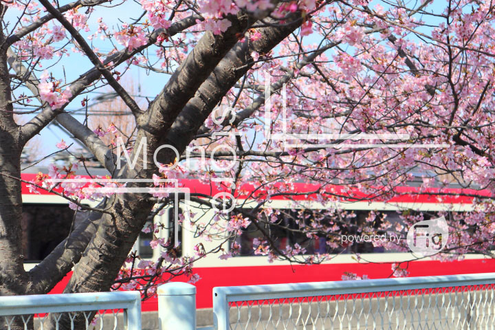 桜の写真 Cherry blossoms Photography 4552