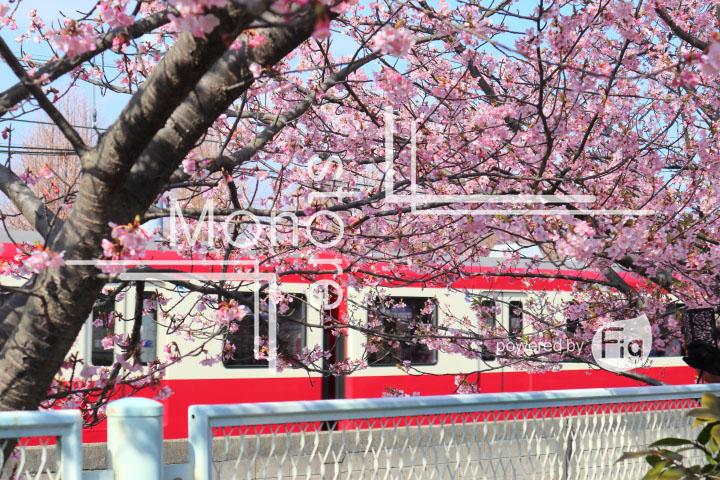桜の写真 Cherry blossoms Photography 4558