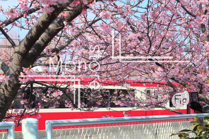桜の写真 Cherry blossoms Photography 4560