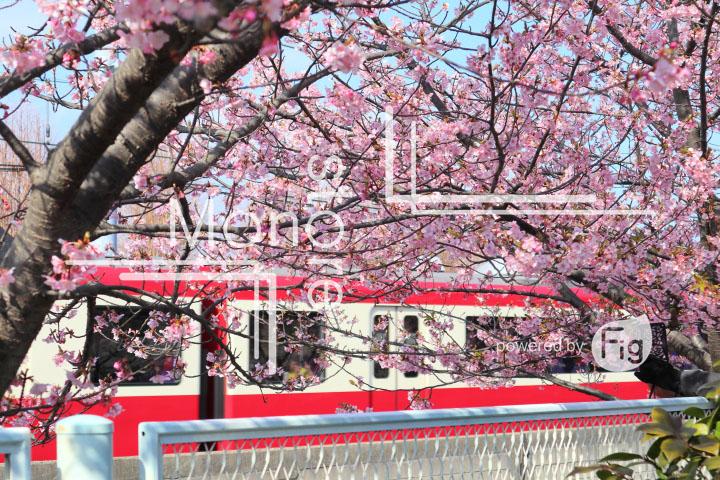 桜の写真 Cherry blossoms Photography 4562