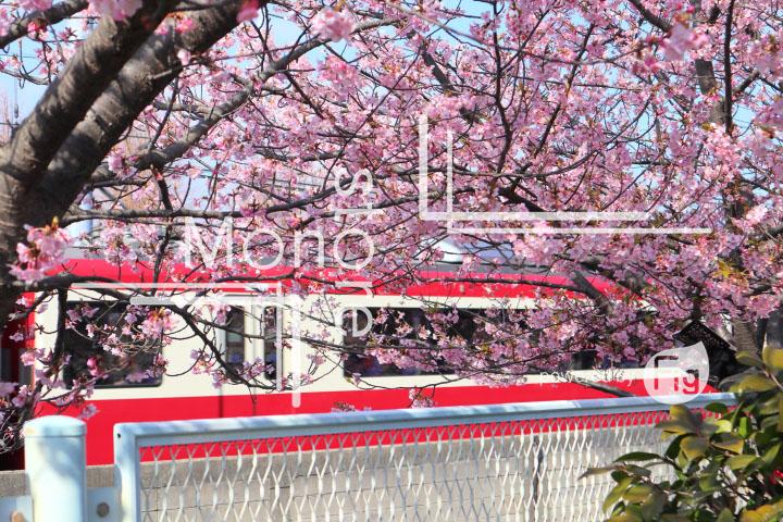 桜の写真 Cherry blossoms Photography 4563