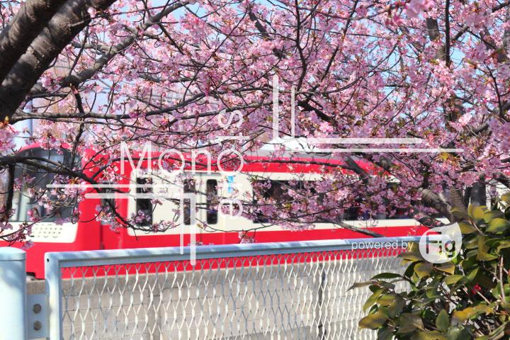 桜の写真 Cherry blossoms Photography 4567