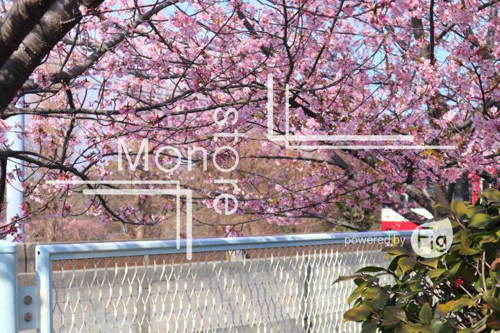 桜の写真 Cherry blossoms Photography 4569