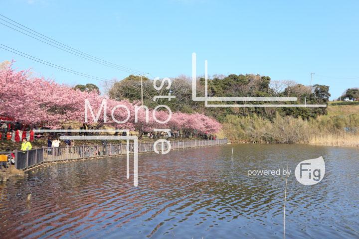 桜の写真 Cherry blossoms Photography 4582