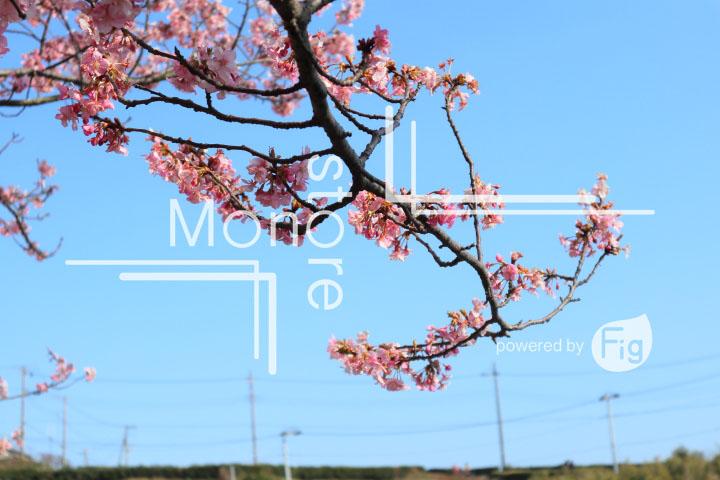 桜の写真 Cherry blossoms Photography 4594