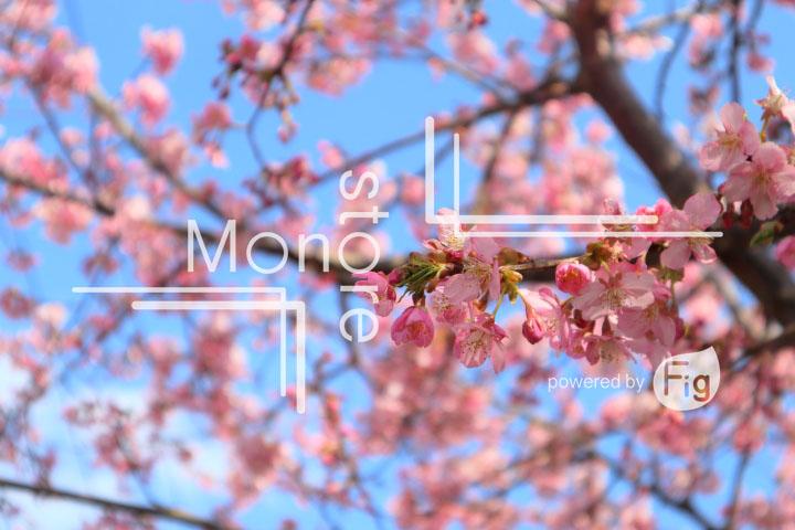 桜の写真 Cherry blossoms Photography 4603