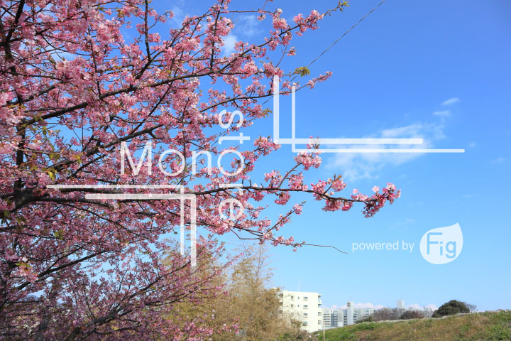 桜の写真 Cherry blossoms Photography 4609