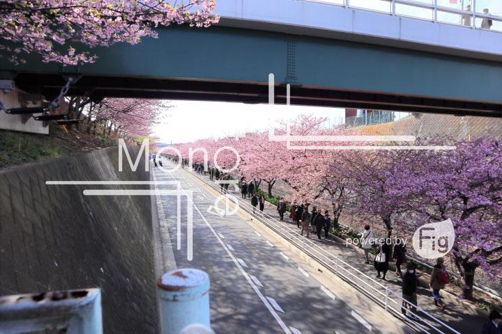 桜の写真 Cherry blossoms Photography 4614