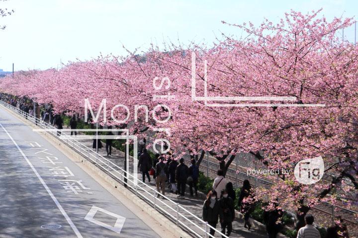 桜の写真 Cherry blossoms Photography 4616