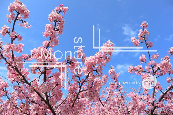 桜の写真 Cherry blossoms Photography 4622