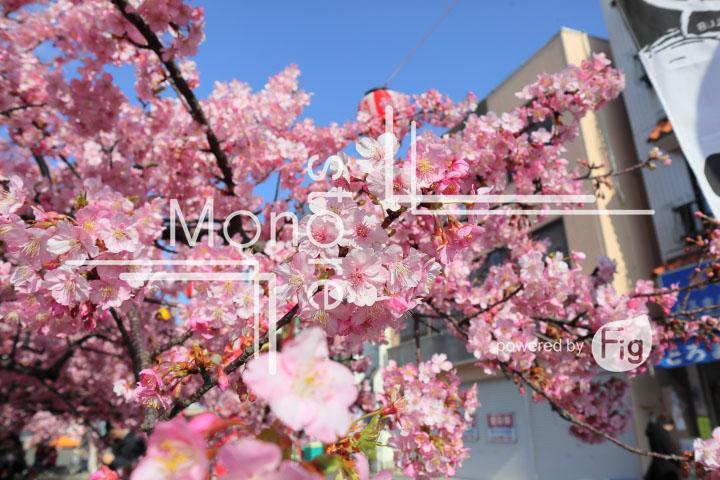 桜の写真 Cherry blossoms Photography 4634
