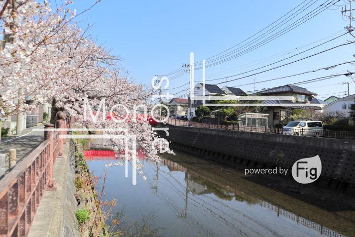 桜の写真 Cherry blossoms Photography 4958
