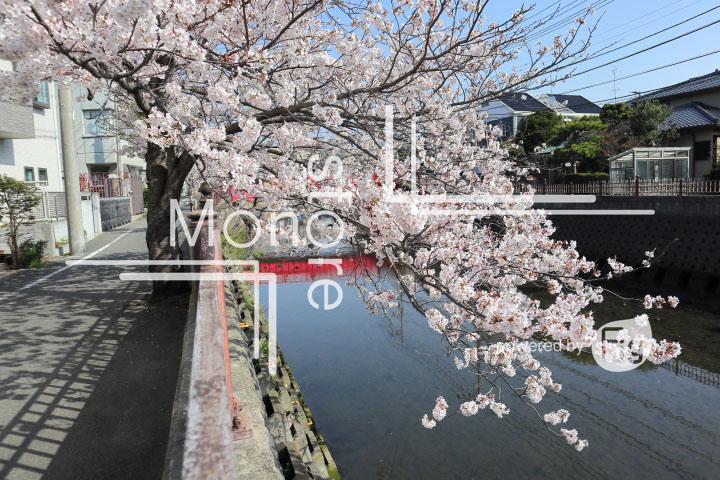 桜の写真 Cherry blossoms Photography 4964